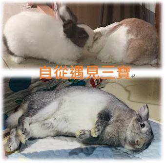 兔寶的生活日誌