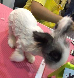 兔毛生長速度不一樣