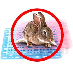 寵物兔如何飼養