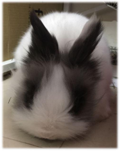 寵物兔毛生長速度不一樣