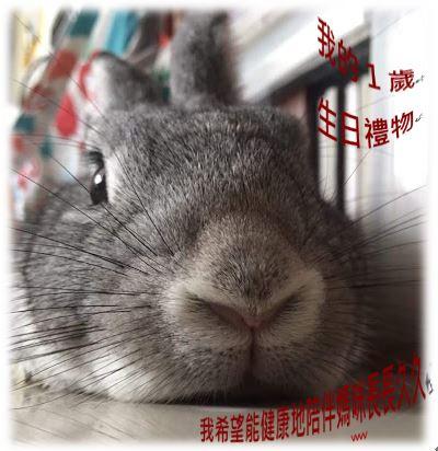 寵物兔結紮為什麼很重要