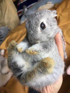 租屋族可以養寵物兔嗎
