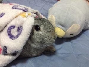 寵物兔結紮為什麼很重要?