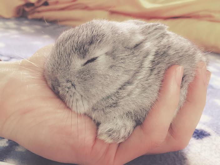 寵物兔的內心話