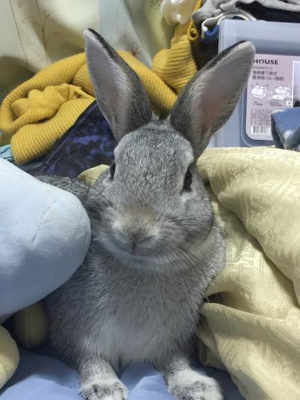 寵物兔結紮為什麼重要?