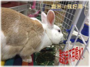 飼養寵物兔的4大錯誤觀念