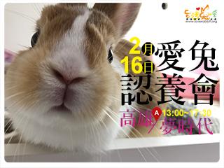 2/16愛兔認養會