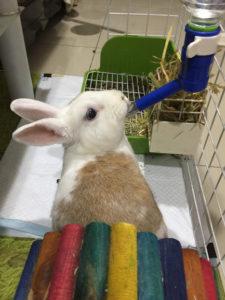 飼養寵物兔的3大錯誤觀念