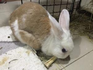 為什麼寵物兔需要玩具?