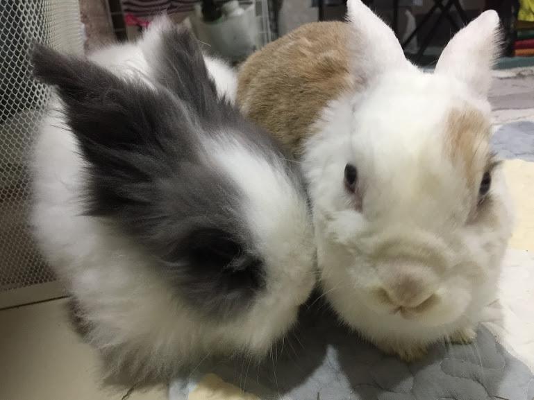 給兔兔降溫方法