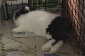 4種給兔兔降溫方法