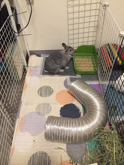 寵物兔如何飼養?