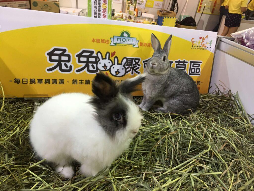 愛兔認養會