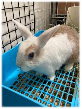 如何輕鬆清理兔兔便盆